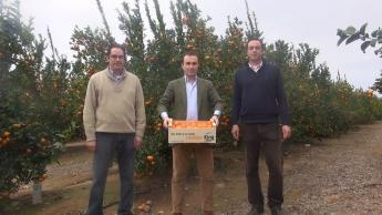 Naranjas King_equipo