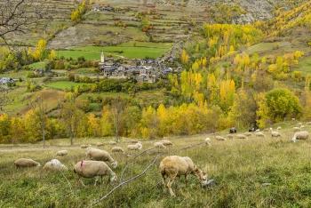 Esterri de Card?s. Parc Natural de l'Alt Pirineu.