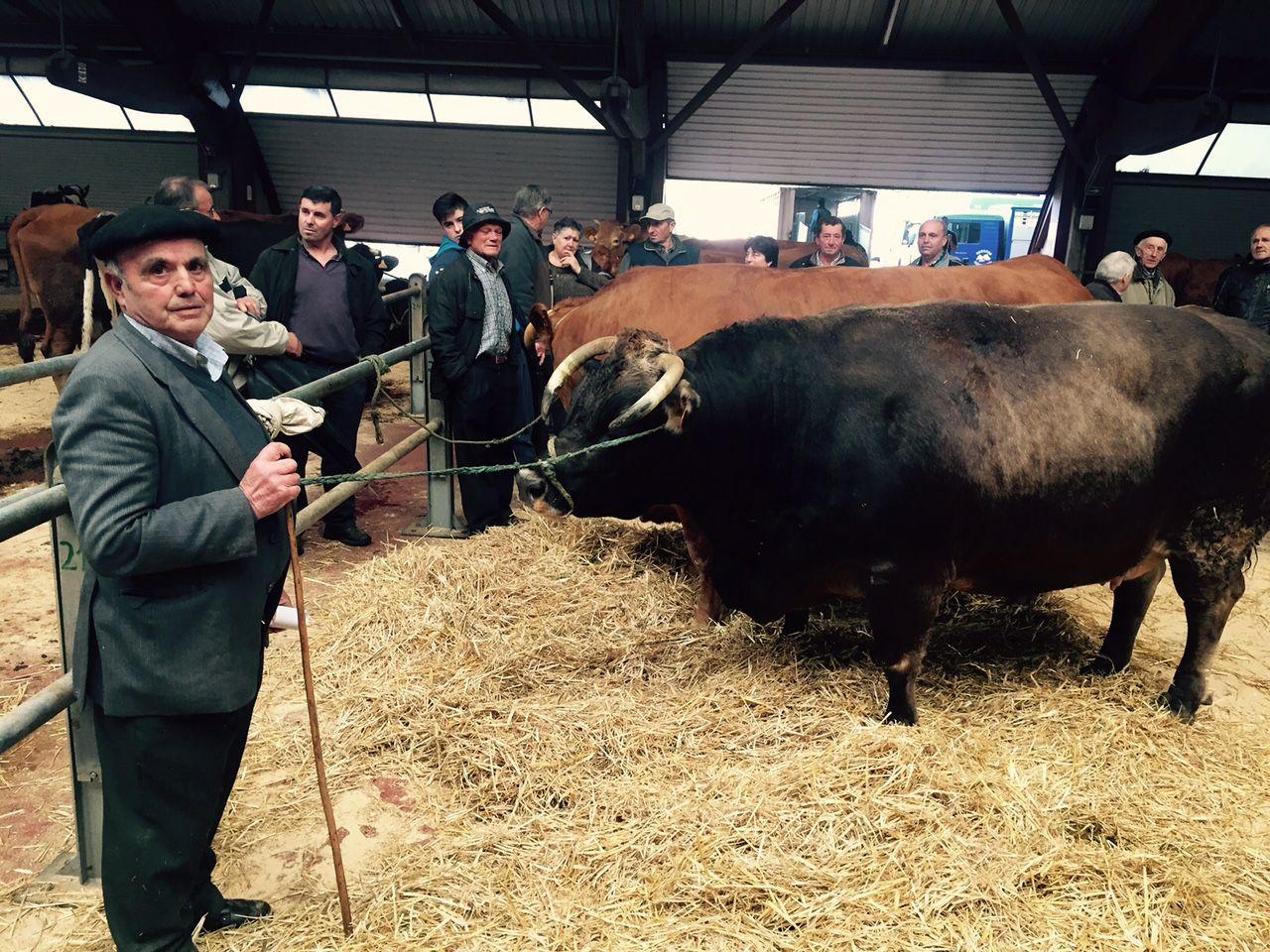 Moura y Roxa, las mejores vacas del mundo