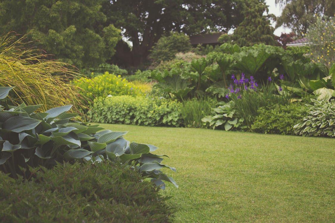 Fotografia Jardín