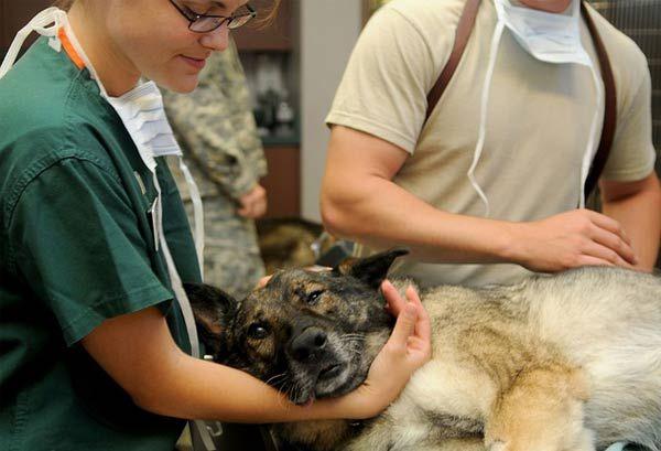 La aseguradora A.M.A y los veterinarios confirman su confianza