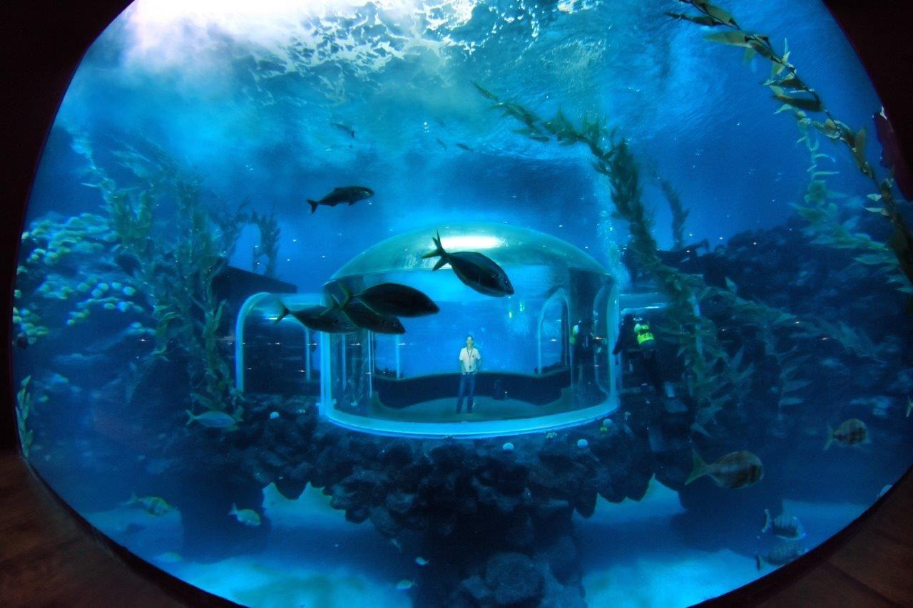 Fotografia El Acuario 'Poema del Mar' abre sus puertas al