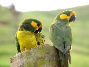 El trabajo de Loro Parque Fundación logra salvar9 especies de