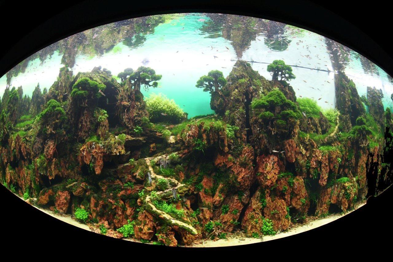 Fotografia Loro Parque inaugura con éxito un jardín sumergido