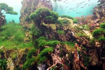 Loro Parque inaugura con éxito un jardín sumergido único en el