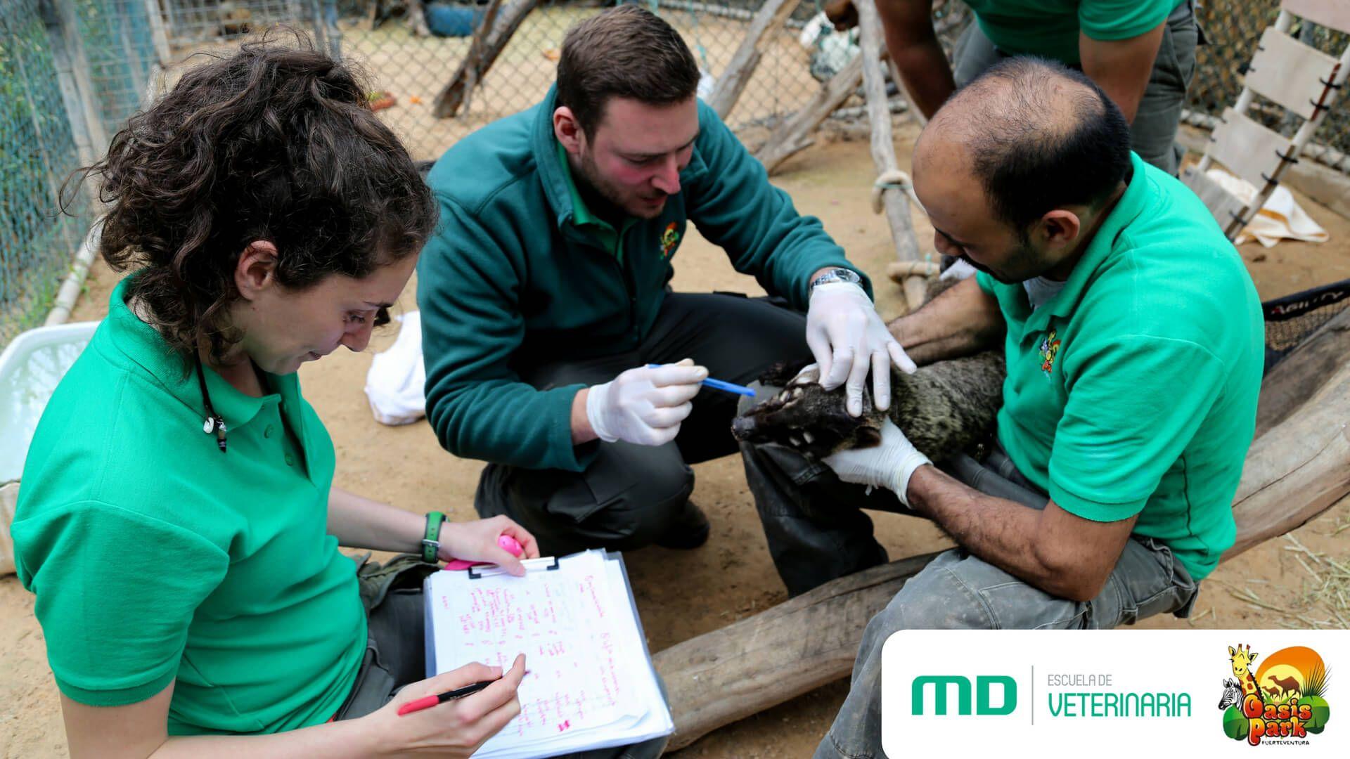 Fotografia Escuela Veterinaria MasterD colabora con Oasis Park