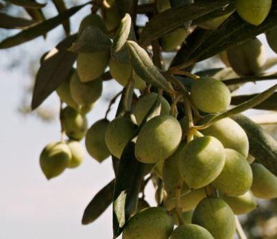Fotografia Aceite de oliva virgen extra