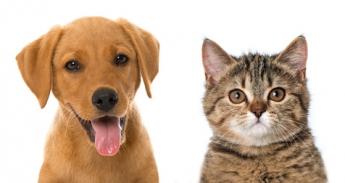 Campaña de esterilización para perros y gastos
