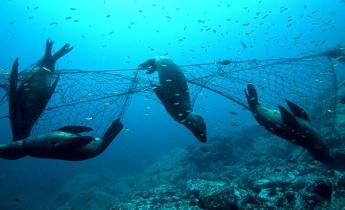 Foto de Sea2see ayuda a combatir la pesca fantasma