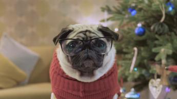 Gizmo salva la Navidad