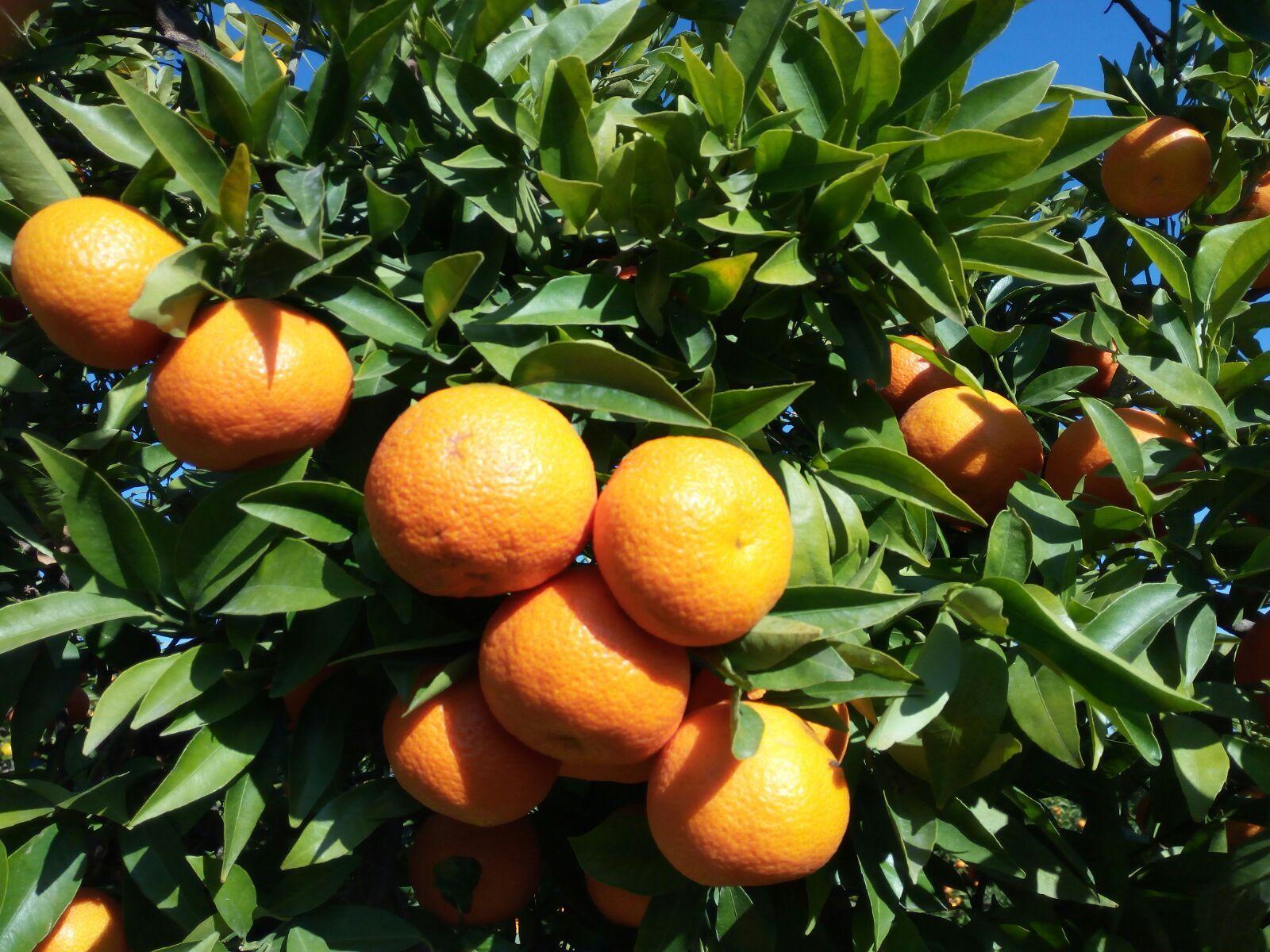 Foto de comprar naranja online