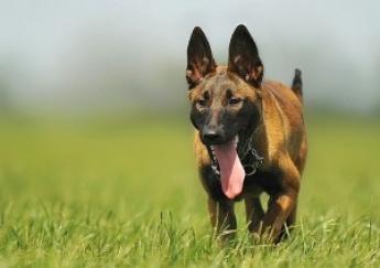 residencia canina tarragona