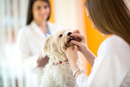 Foto de Limpieza bucal para perros