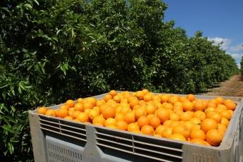 Comprar naranjas por internet