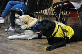 Perros de Servicio de la Fundación Canadd Internacional