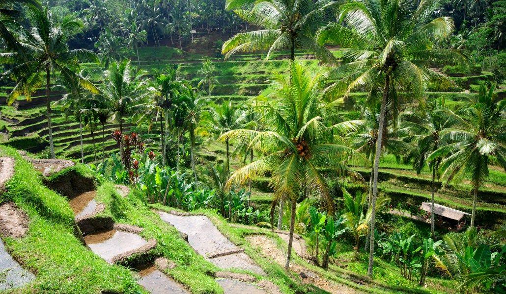 Foto de Bali Paisaje