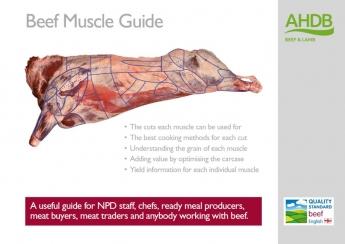 La importancia del músculo para obtener el máximo valor de la canal de vacuno