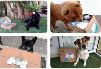 Nace Central de Mascotas, el primer buscador especializado en residencias para mascotas en España