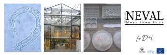 NEVAL pone en marcha la Primera Colección de Nematodos Fitoparásitos en España