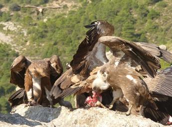 Foto de Tierra de Berrea y aves rapaces