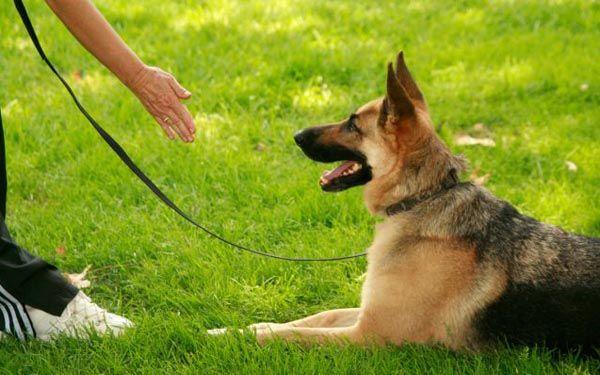 Foto de adiestrador de perros