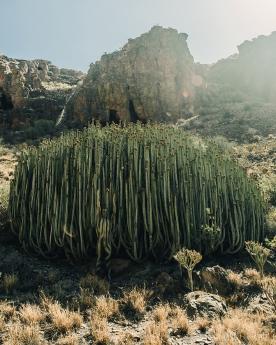 Foto de Encuéntrame y piérdete en Barranco Hondo - Gran Canaria