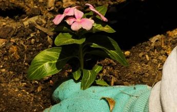 La nueva jardinería tiene conciencia climática
