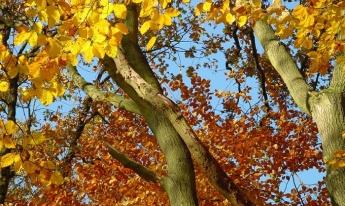El otoño es el protagonista oficial del Área 62 Restaurante de Barbastro