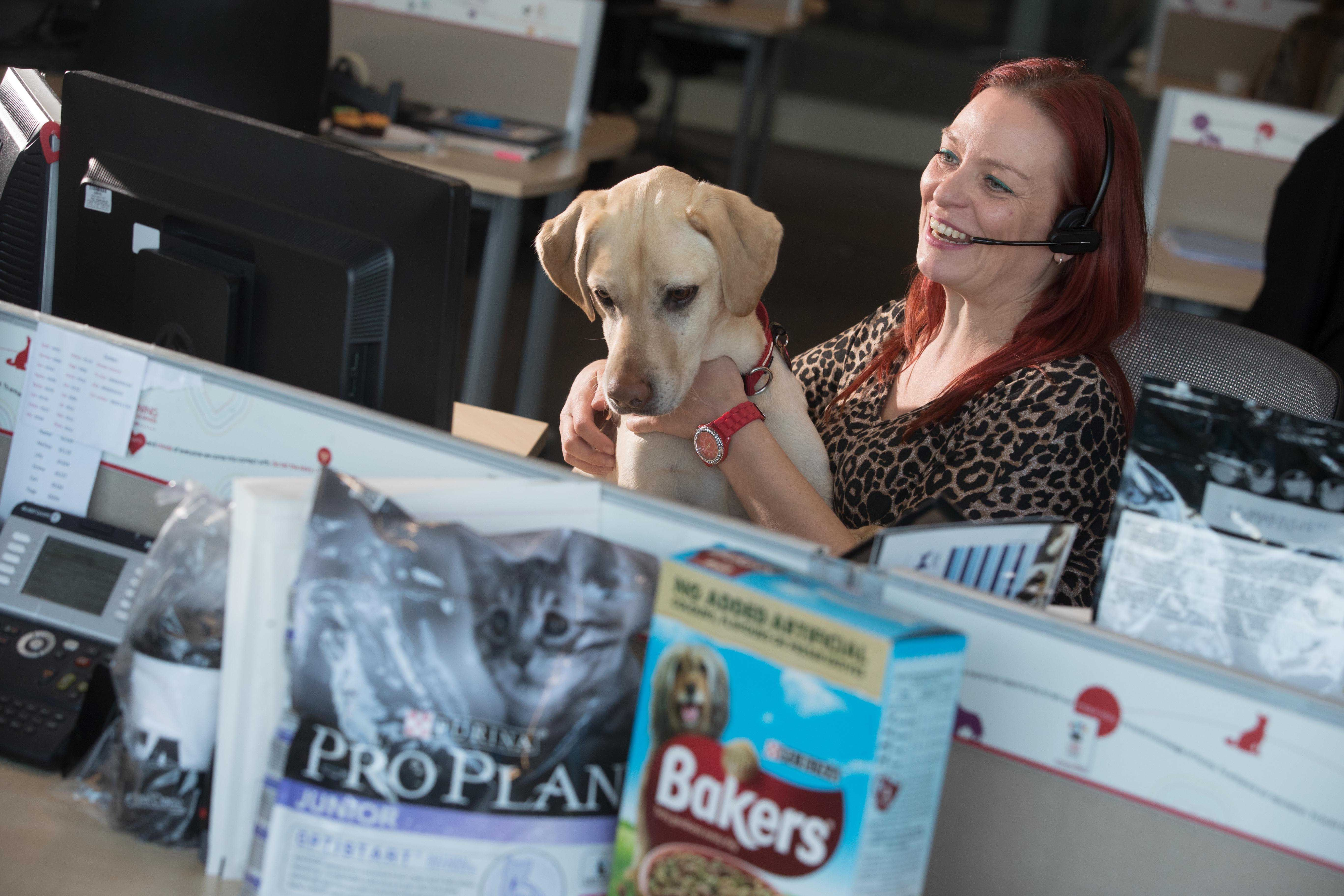 Foto de Pets at Work Purina