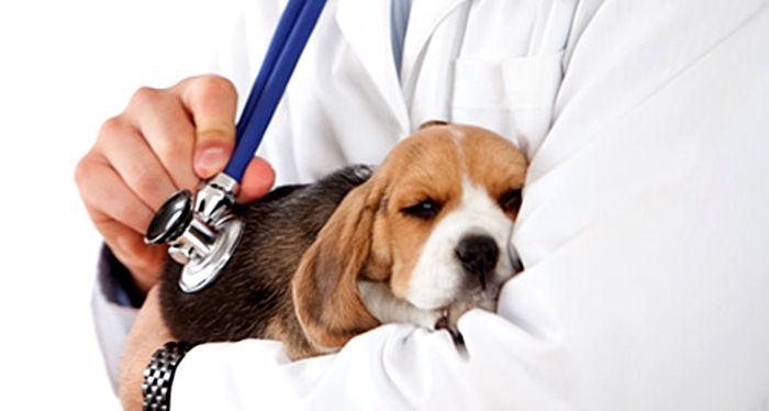 Foto de  Cachorro en el Veterinario