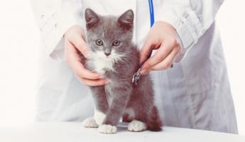 La farmacia veterinaria exhibe músculo en el mercado
