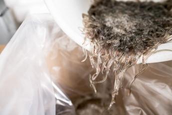 Los pescadores reciben un precio histórico por las angulas