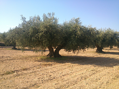 Foto de aceite ecológico demeter