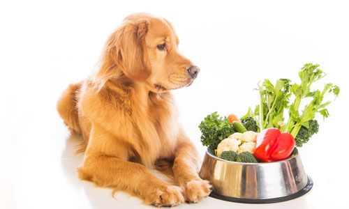 Foto de Alimentación para Mascotas