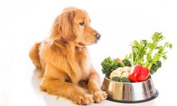 Alimentación para Mascotas