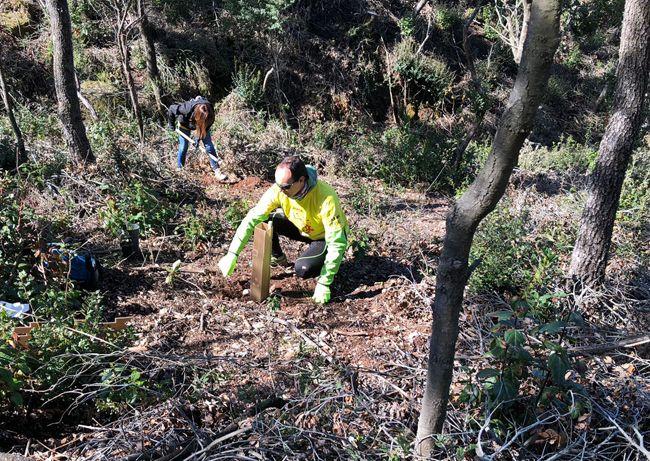 Foto de DHL realiza una plantación de 400 árboles en Barcelona