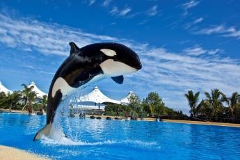 Justicia holandesa respalda a Loro Parque en el caso de orca Morgan