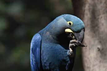 Foto de El trabajo de Loro Parque Fundación logra salvar  9 especies