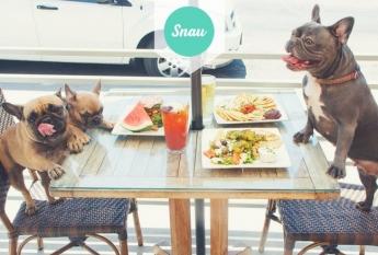 Snau presenta su primer ranking de restaurantes Dog friendly de Madrid