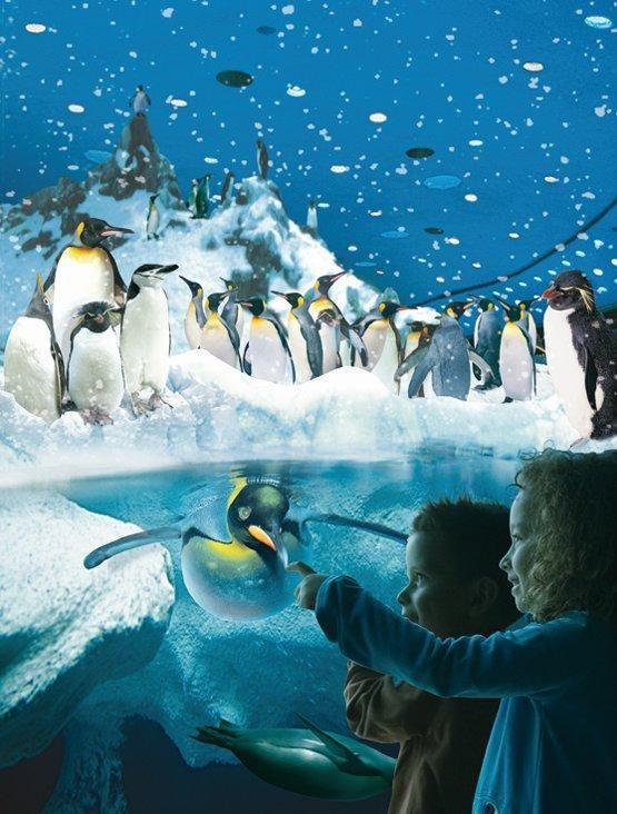 Fotografia Loro Parque será sede de la reunión mundial de zoos en