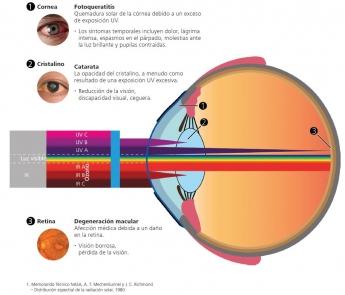 Efectos en el sistema visual de la radiación UV