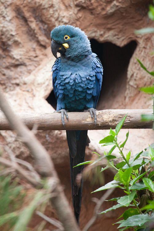 Fotografia Loro Parque, reconocido por segunda vez como el zoológico