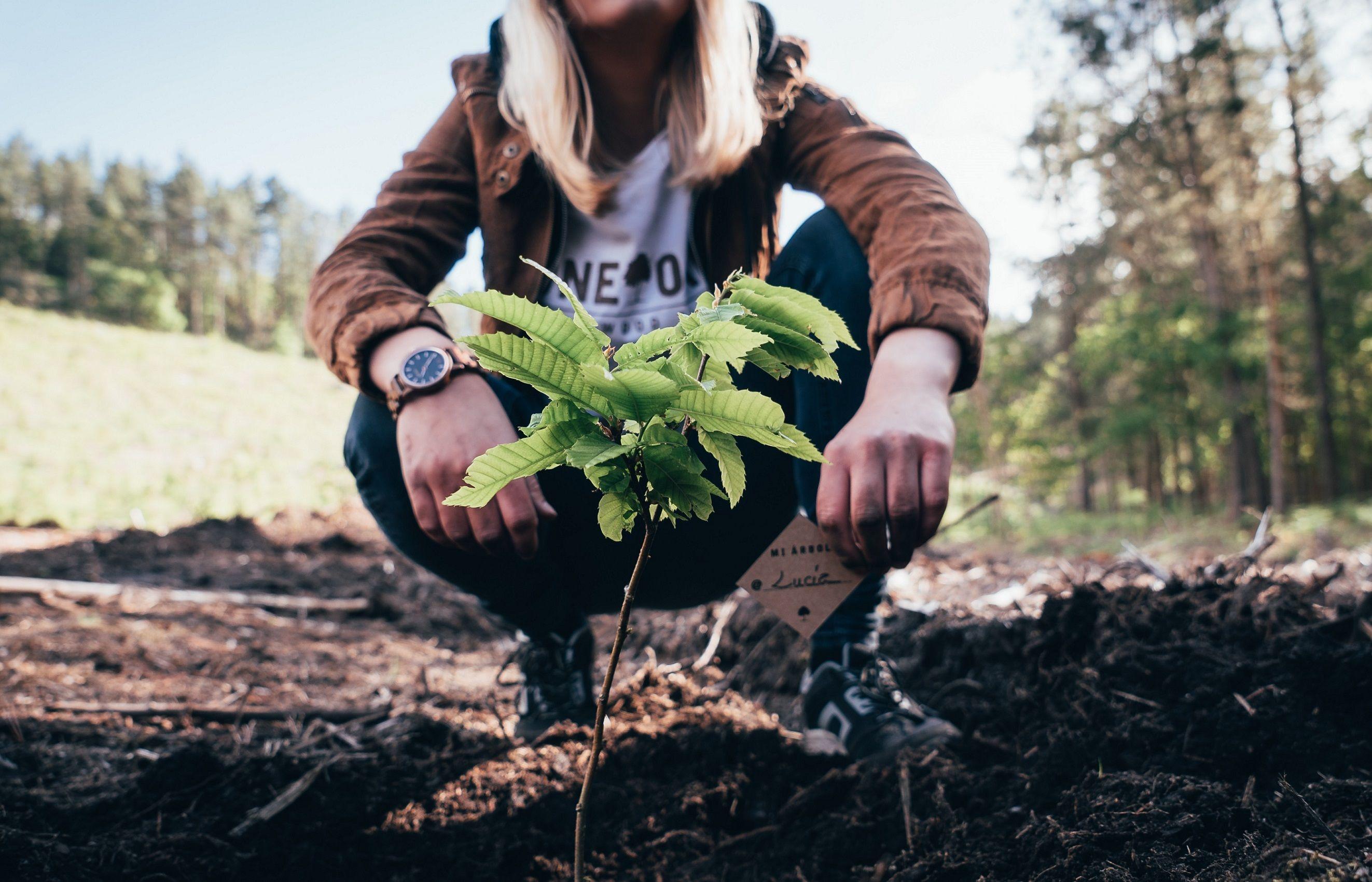 Foto de ONE OAK = Un producto, un árbol replantado