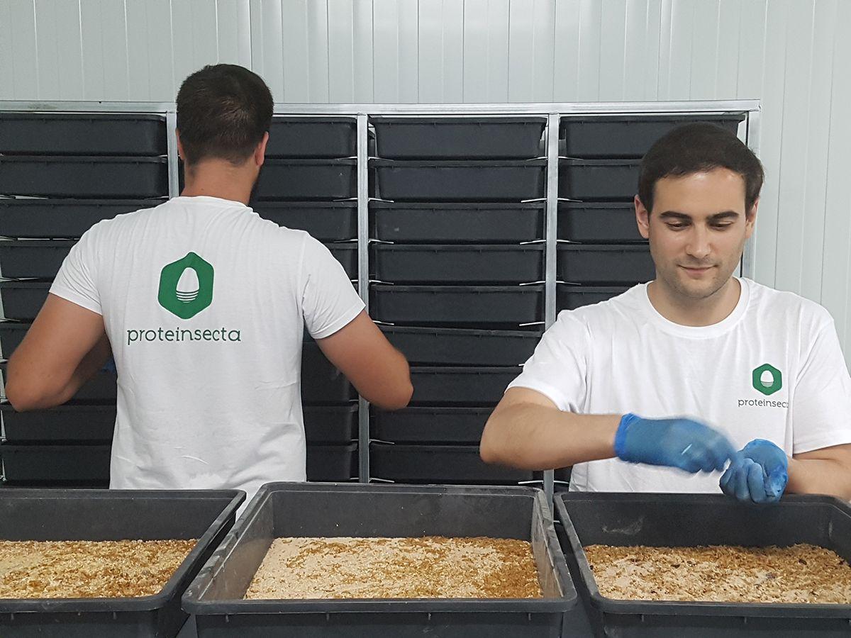 Foto de Técnicos Proteinsecta trabajando en una granja de insectos