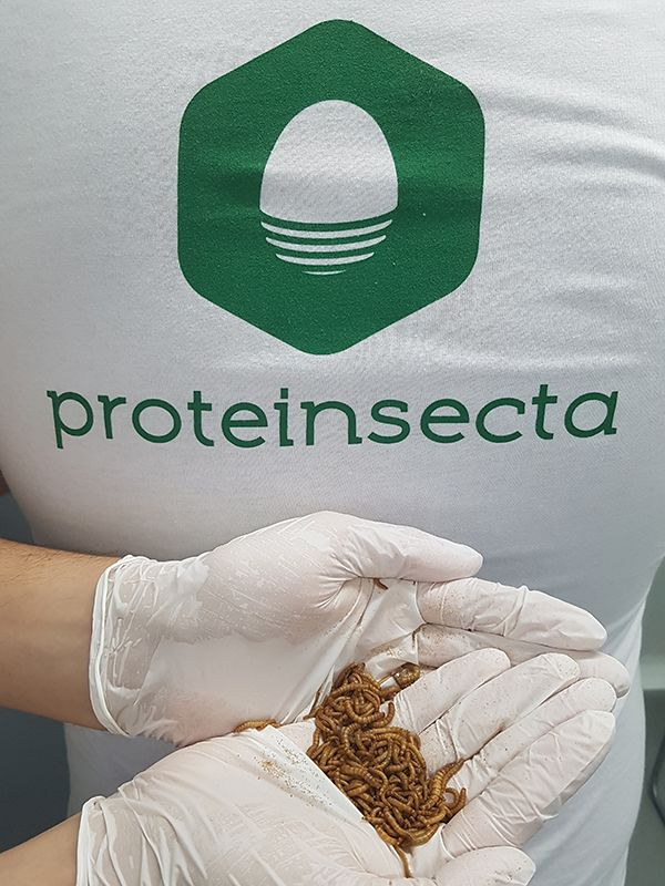 Proteinsecta