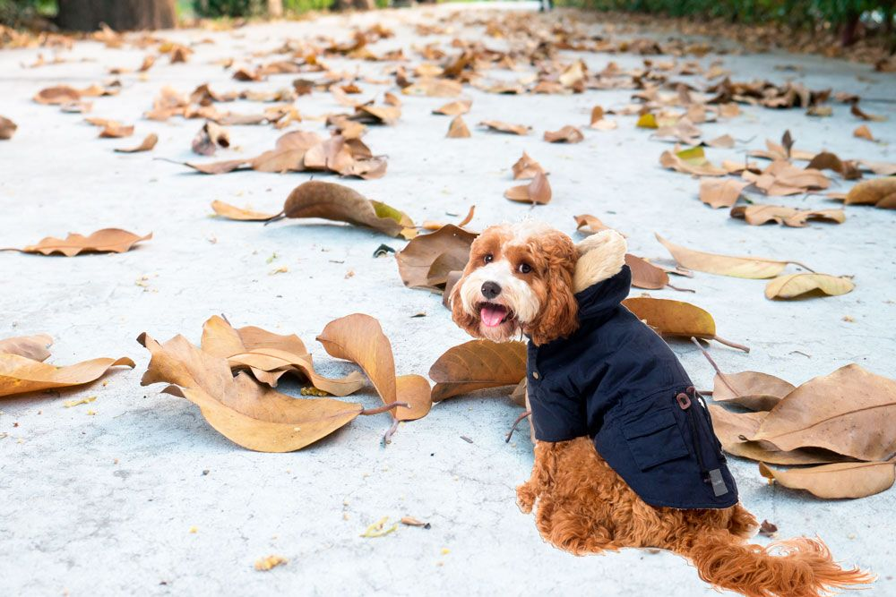 Foto de Una mascota lista para pasear con frío