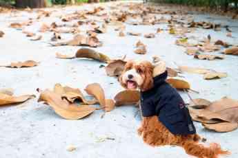 Una mascota lista para pasear con frío