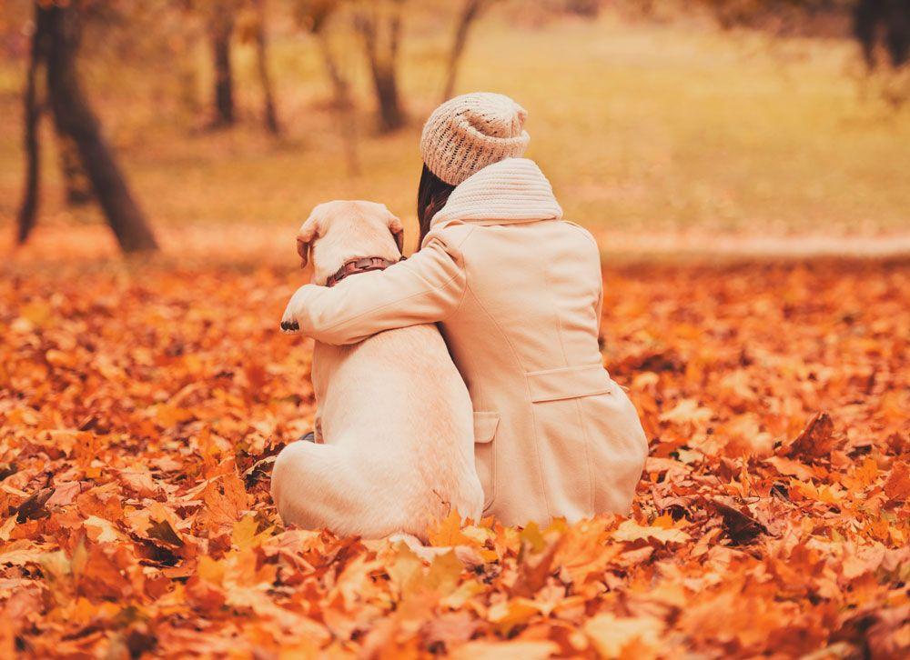 Foto de Los perros son una de las mejores compañías que un ser