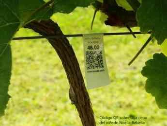 Código QR en viñedo Noelia Bebelia