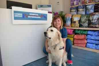 El Hospital veterinario Conde Orgaz explica cómo evitar que los perros puedan atacar